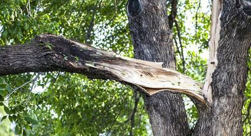 What to Do if a Storm Damaged My Tree?
