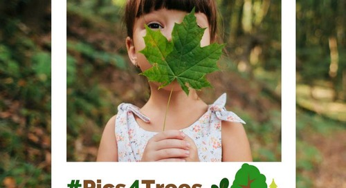 Plant Two Trees with a Click of a Button this Arbor Day