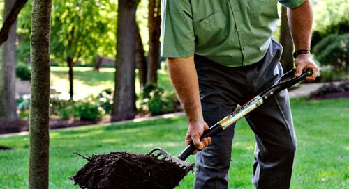Should I Mulch Around Trees or Not? Yes, and Here's Why