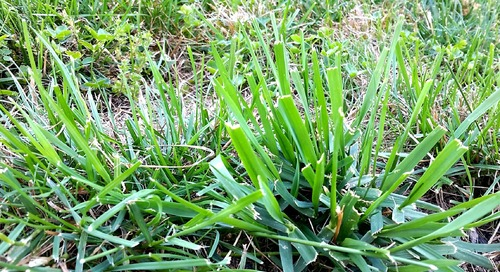 How to Get Rid of Crabgrass in the Summer