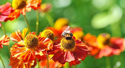 Creating a Pollinator Garden (Steps and a Pollinator Plant List)