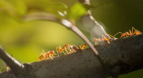 How to Get Rid of Ants Near Your Trees