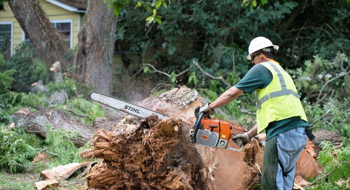 The Best Advice on DIY Tree Removal and Cutting