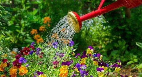Morning (Not Night) is the Best Time to Water Plants in Summer.