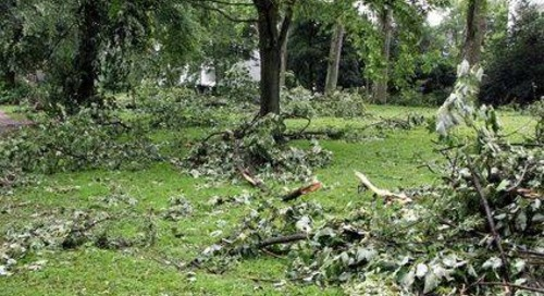 Step-by-Step: How to Clean Up the Yard and Trees After a Storm