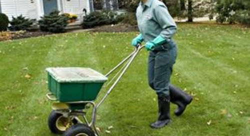 Best Time to Overseed Lawn (Midwest, Northeast, South, West)