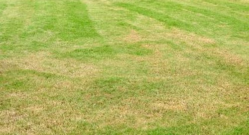 Grass Turning Yellow After Fertilizing? Here's How to Repair.