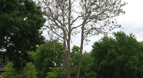 Signs and Symptoms of Tree Stress (Plus Treatment)