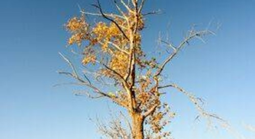 Is My Tree Dying or Dead? Here's How to Tell and What You Can Do