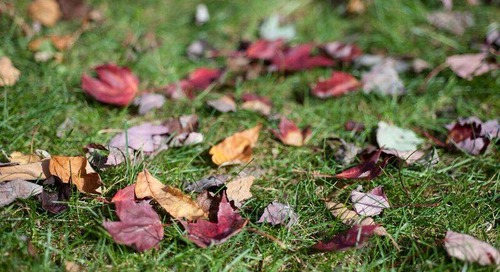 The Best Way to Clean Up Leaves (Even in a Large Yard)