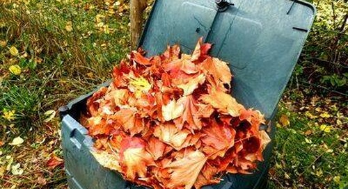 Compost Shredded, Dry Leaves to Get These Leaf Compost Benefits
