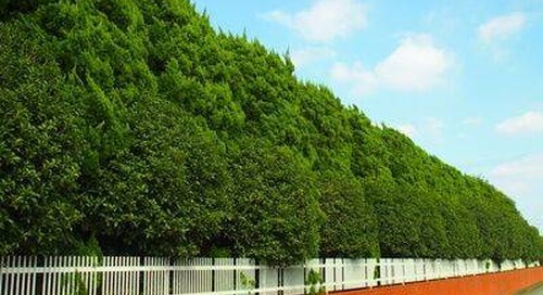 The Best Trees for Blocking Wind and Windbreak (By Zone)