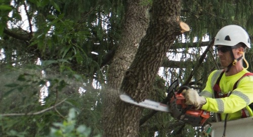 How Much Should I Pay for Tree Removal?