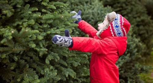 10 Types of Common Live Christmas Trees and Their Advantages