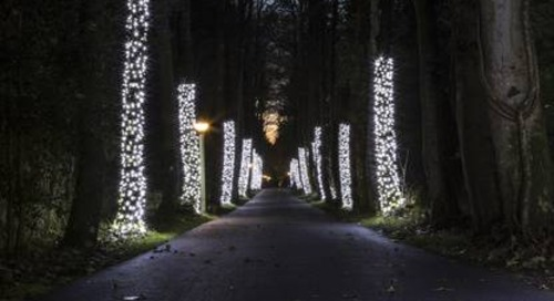 Is It OK to Keep Outdoor Tree Lights on Year Round?