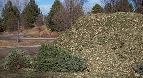 Is a Christmas Tree Good for Mulch or the Compost Pile?