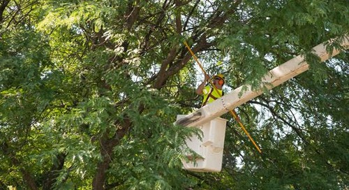 What's the Cost of Tree Trimming, Branch Removal or Pruning?