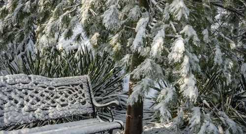 Can You Plant Trees, Shrubs or Evergreens in the Winter?