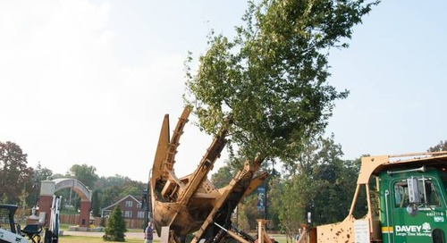 Tree Transplanting Cost for Big  and Small Trees
