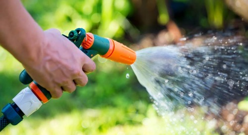 When to Start Watering Trees in Spring