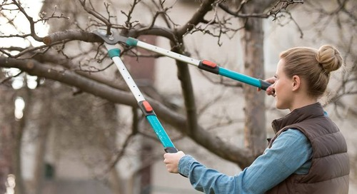 DIY - How to Trim Tree Branches Yourself