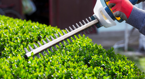 Can I Use a Hedge Trimmer or Pole Saw to Trim My Trees?