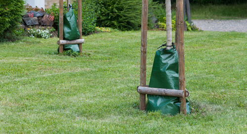 Do Tree Watering Bags Work?