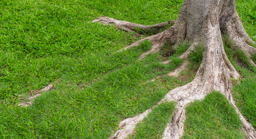 Are Exposed Tree Roots a Bad Thing? Get to the Root of the Problem