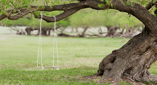 How To Properly Install A Tree Swing And Avoid Damage To My Tree