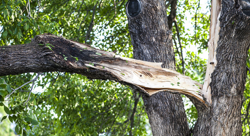 My Tree Was Struck By Lightning. What Do I Do?
