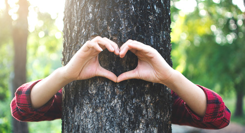 How To Memorialize A Beloved Tree You Have To Remove (Ideas)