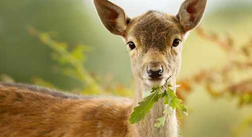 Fast Growing Trees That Deer Likely Won't Damage