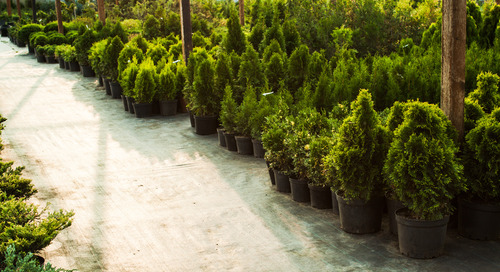Top Hardy Trees & Shrubs (By Zone)