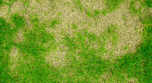 What Causes Brown Spots On Lawns During The Fall?