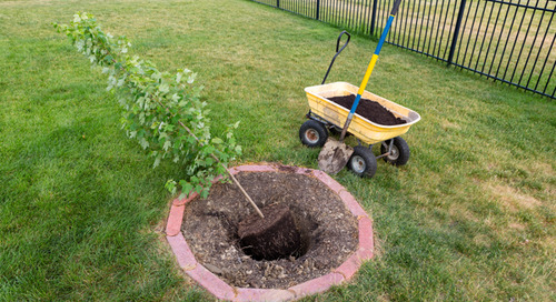 How To Transplant A Tree: Step-by-Step Tutorial