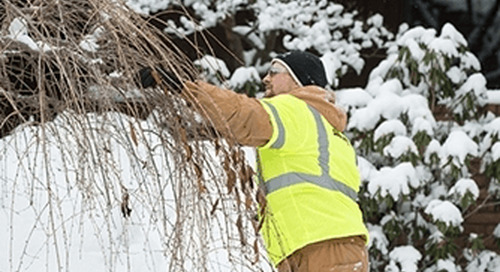 Worst Mistakes Prepping Trees For Winter