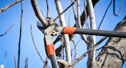 Winter Tree Care Tips for Roots, Trunks and Branches