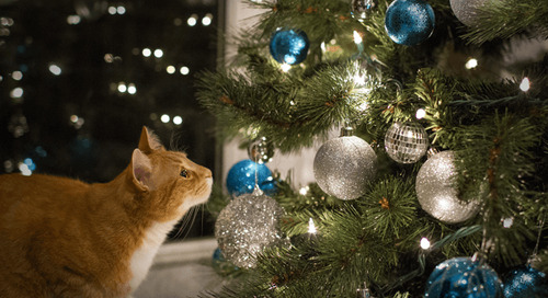 Cat Proof Christmas Tree Ideas and Tips