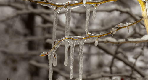 How to Get Ice Off Trees and Shrubs