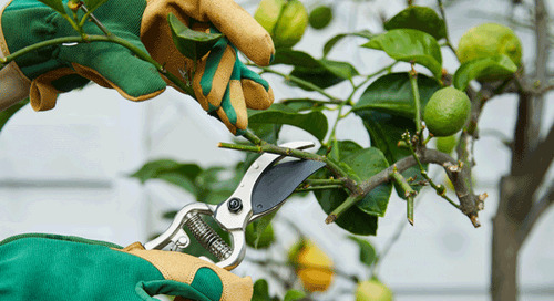 How To Care For Fruit Trees In Early Spring