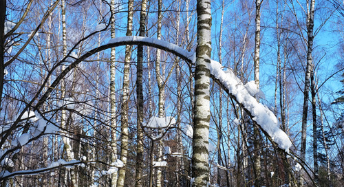 How To Help Trees Recover From Winter Dieback