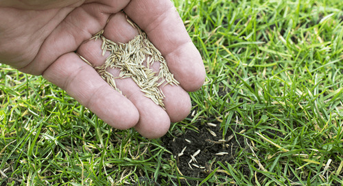 Can I Plant Grass Seed in April?