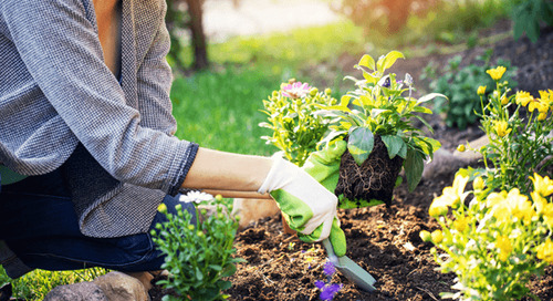 Garden Tips: How to Select, Arrange, and Plant Flowers in a Flower Bed