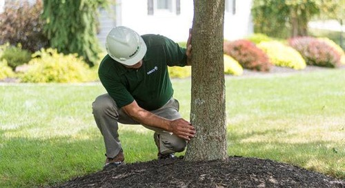 Fact or Fiction: Five Ways You May Be Harming Your Trees