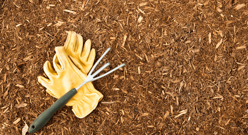 What Mulch is Best For Repelling Bugs?