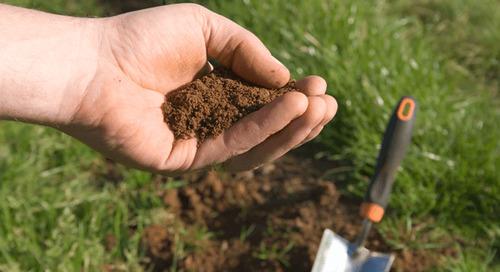 How Does Soil Salinity Affect Plants?