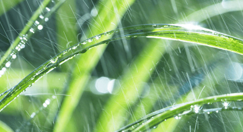 Can Too Much Rain Hurt Your Lawn?