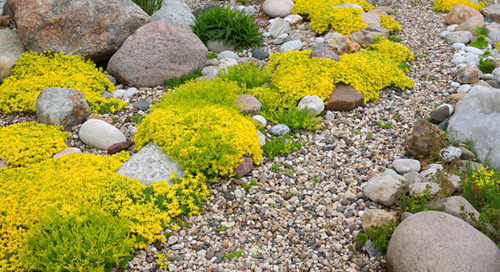 Landscaping in Rocky Soil