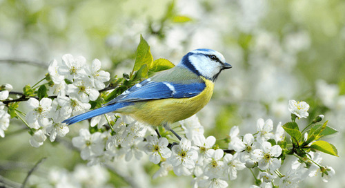 Best Trees and Plants for Bird Lovers