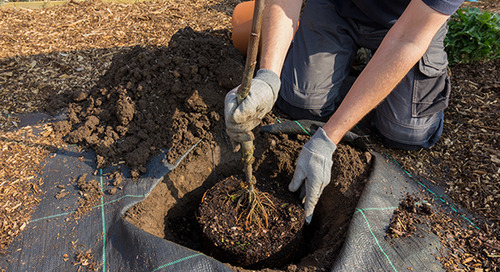 How to Take Care of a Newly Planted Tree (5 Easy Steps)